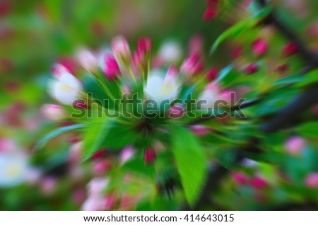 White-pink flowers blooming shrub springtime. Natural background for background and text. Blooming spring tree branch background. Blurry abstract background - stock photo