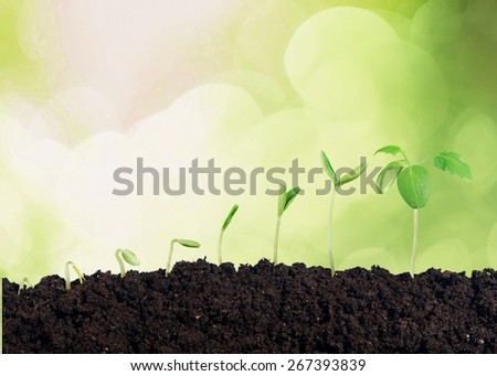White, plant, background.