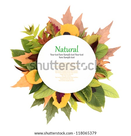 White plate with colorful leaves around it - stock photo