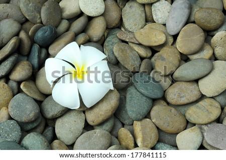 white plumeria flower on rock texture - stock photo