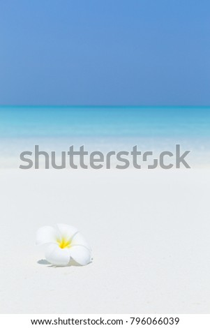 White plumeria flowers on tropical sandy beach with sea view background for copy space