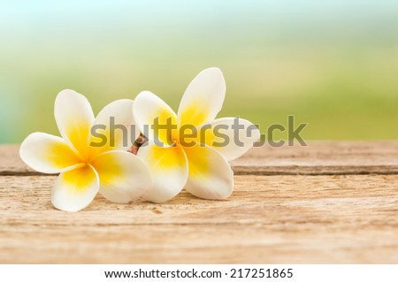 White Plumeria flowers on wood - stock photo