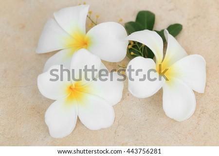 White Plumeria or Frangipani tropical flowers. - stock photo