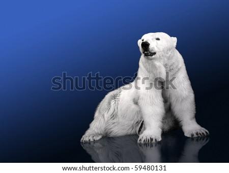 White Polar Bear Hunter - sitting - stock photo