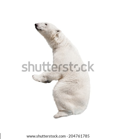 White polar bear. Isolated on white background - stock photo