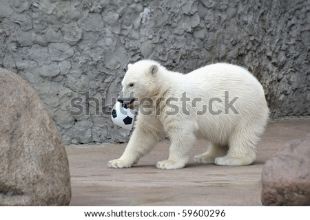 White polar bear with soccer ball - stock photo