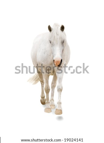 White pony on the white background - stock photo