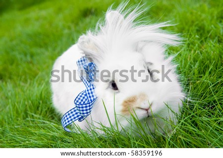 White pretty show rabbit buck on green summer grass - stock photo