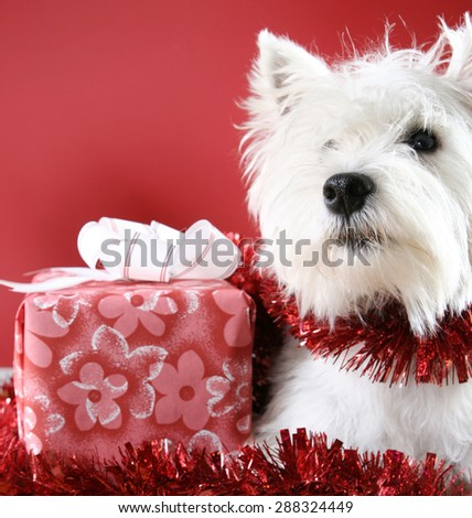 Westie Dog Stock Images Royalty Free Images Amp Vectors