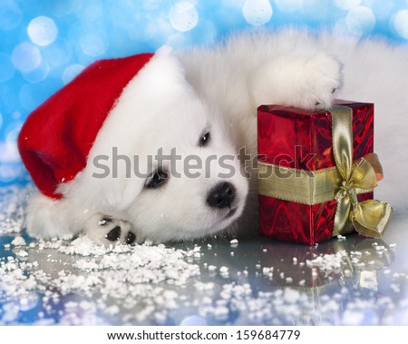 white puppy with a gift in paws - stock photo