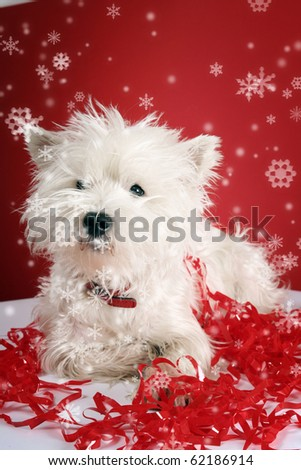 White puppy with christmas garland. - stock photo