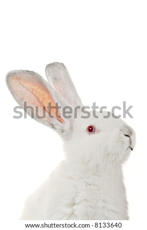 White rabbit against white background - stock photo