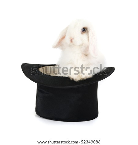 White rabbit at black hat isolated on a white background - stock photo