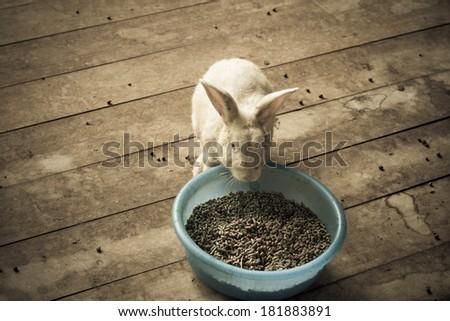 White rabbit feeding on the wooden floor - stock photo