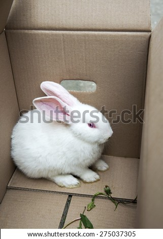 White rabbit held in a cartoon box, sitting in the corner - stock photo