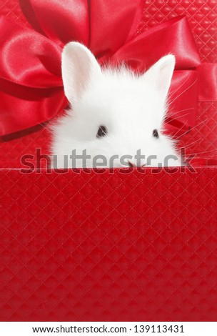 White rabbit in red gift box - stock photo