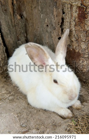 White rabbit in the forest - stock photo