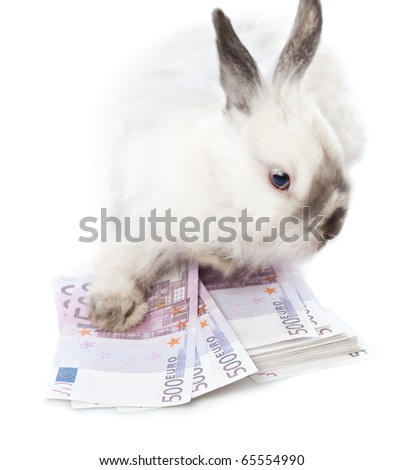 White rabbit is sitting on bundle of scratch . Isolated on white background