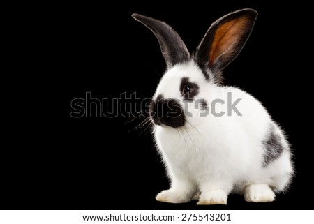 White rabbit isolated on black background - stock photo