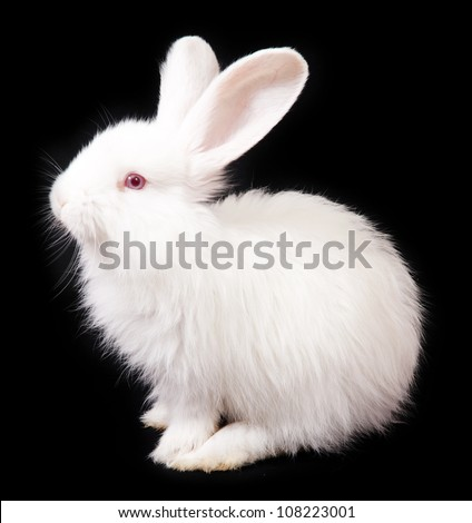 White Rabbit on a black background - stock photo