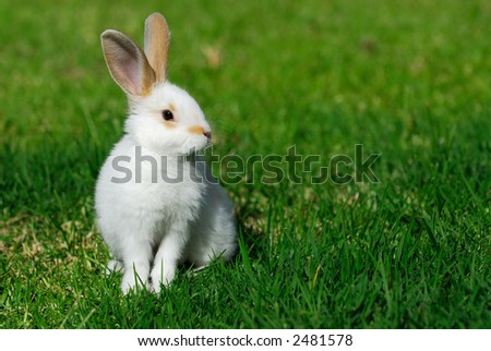 white rabbit on the grass - stock photo