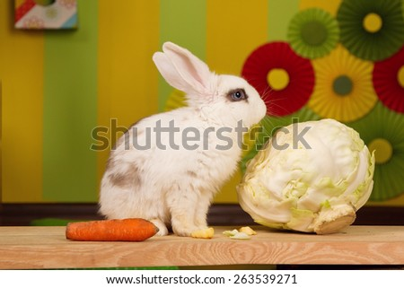 White rabbit with a large cabbage and carrots on a bright background scenery. Easter - stock photo