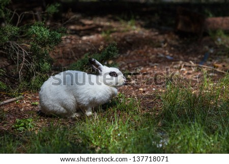 White rabbit with black eye in forest - stock photo