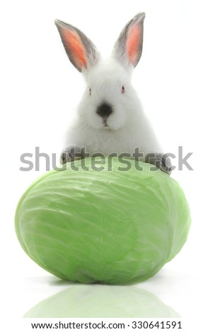 white rabbit with cabbage on a white background - stock photo