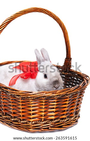 White rabbit with red ribbon in a basket isolated on white background - stock photo