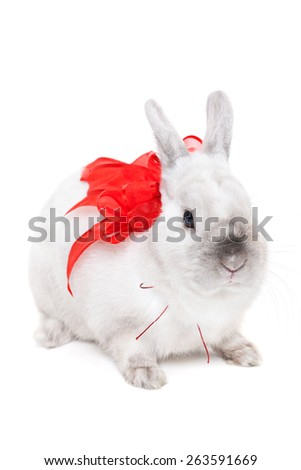 White rabbit with red ribbon isolated on white background - stock photo