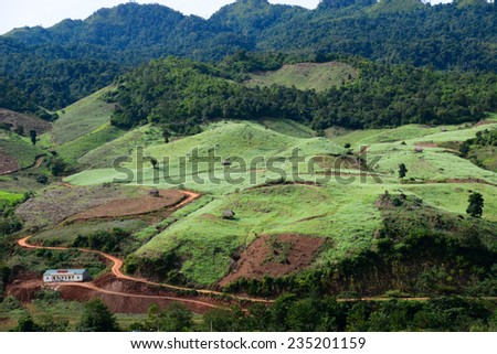 White rapeseed flower field in Moc Chau, Son La province, Vietnam  - stock photo