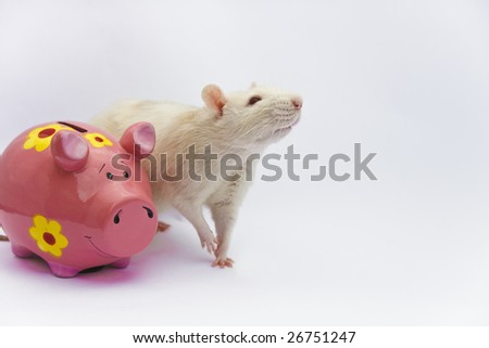 White rat and pink piggy bank