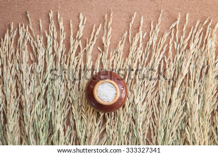 white raw rice and paddy rice on wood background - stock photo