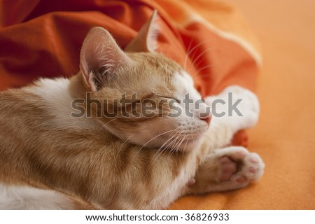 White-red cat is sleeping