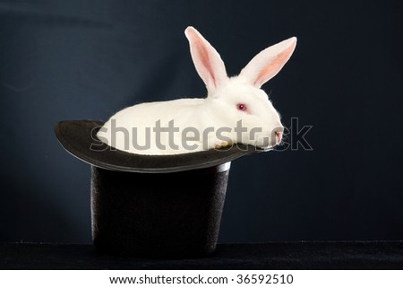 White Rex rabbit in black top hat on black background - stock photo