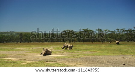 White rhino at lake Nakuru Rift Valley Kenya - stock photo
