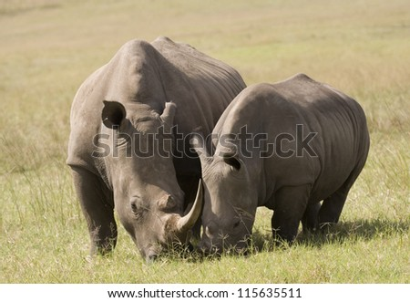 White Rhino Mother & Baby, South Africa - stock photo