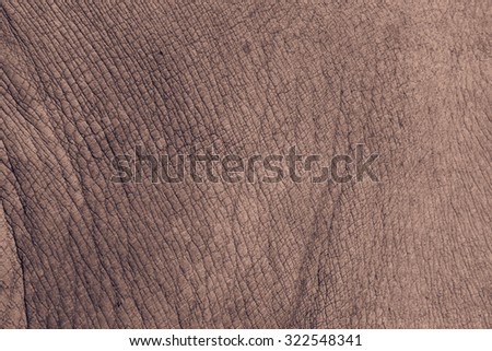 White rhino skin texture background