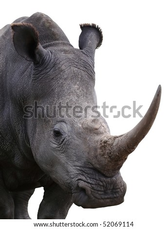 White rhino with large horn isolated on white backround