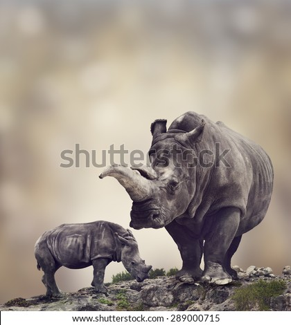 White Rhinoceros:Adult And Baby - stock photo