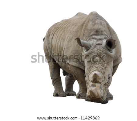 White Rhinoceros isolated on white