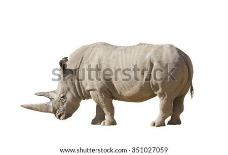 White rhinoceros on a white background isolation - stock photo