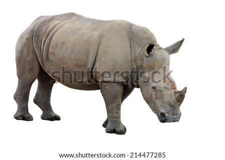 White Rhinoceros or Square-lipped rhinoceros - Ceratotherium simum on a white background - stock photo