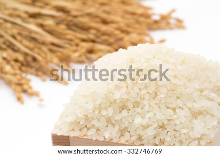 White rice and rice