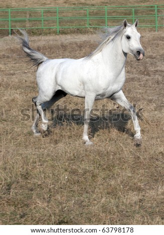 white riding horse out side - stock photo