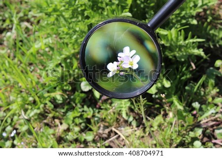 White rock cress flowers blooming buds stock photo royalty free white rock cress flowers and blooming buds through a female hand holding magnifying glass mightylinksfo