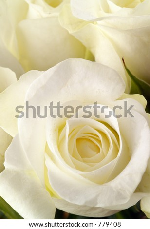 White rose blooms close up, with a few water droplets.  Shallow DOF; focus is in closest rose. - stock photo