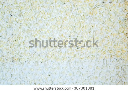white rose for background texture - stock photo