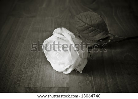 White Rose in black and white on wood - stock photo