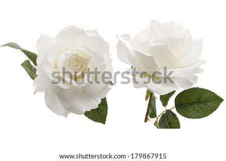 white rose isolated on white background  - stock photo
